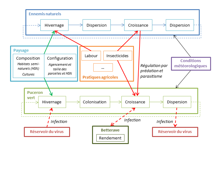 Synthesis diagram pointing out the multilevel effects of ALAN and the challenges of articulating organizational levels for a bottom-up approach of the dark ecological network