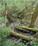 Évaluer la qualité des boisements riverains avec l'IBP et de Connectivité des Ripisylves