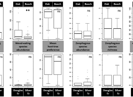 The use of sentinel logs to assess host shifts in early beetle colonisers of deadwood under climate-