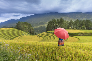 L'agroécologie et l'écologie politique féministe pour repenser les rapports des sociétés à l