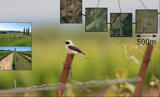 Un nouvel article est paru dans Journal of Applied Ecology