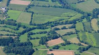Des parcelles plus petites et plus diversifiées favorisent la diversité des plantes jusqu'au cen