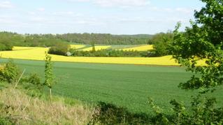 Impact des pesticides et de la structure du paysage sur la prédation des bioagresseurs
