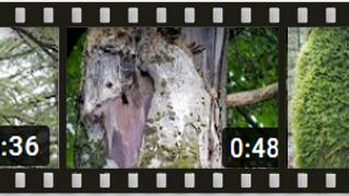Dendromicrohabitats, késako ? Tout savoir via la série YouTube dédiée et plus encore !