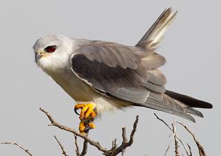 Changements récents et à long terme dans les communautés d'oiseaux nicheurs de la zone atelier P