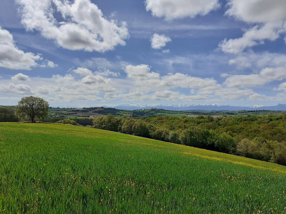 vue du paysage des coteaux avec les pyrénées dans le fond