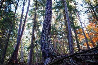 Sage usage de nos forêts : l'approche intégrative