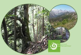 Analyse spatio-temporelle du réseau de peuplements forestiers en libre évolution du PNM