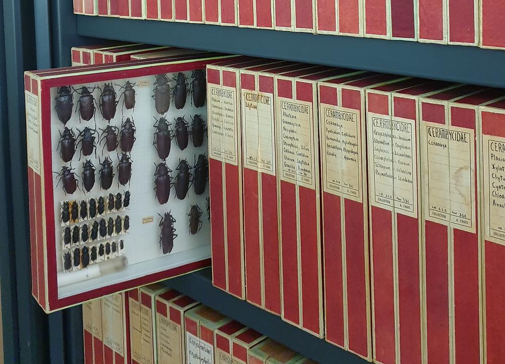 boite de collection de coleoptères