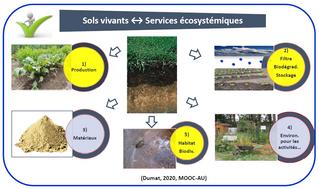 Optimiser les services écosystémiques des sols pour accroitre la durabilité des jardins et du monde…