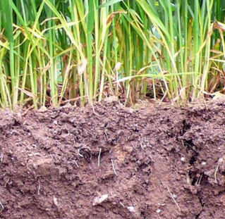 Farmers' behaviour towards soils in Europe: values and practices