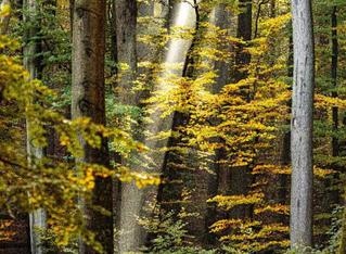 Gestion forestière et changement climatique : une nouvelle approche de la stratégie nationale d'atté