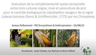 Evaluation de la complémentarité spatio-temporelle entre 3 cultures (vigne, maïs et pins)