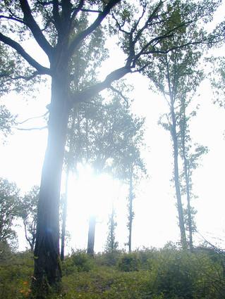 Biodiversité et gestion forestière