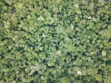 Fiche GeoDEV : recherches sur la gestion des ressources forestières