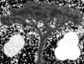 Stone-Pine-Logo-on-transparent.png