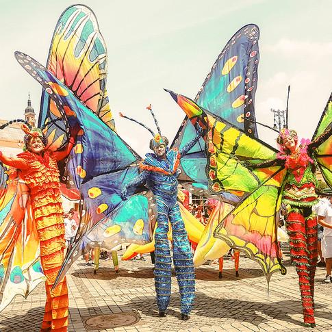 Schmetterlinge-9.jpg