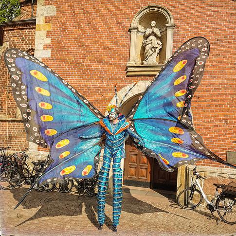 Schmetterlinge-8.jpg