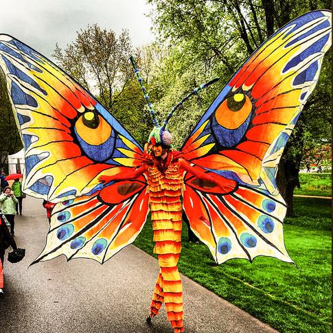Schmetterlinge-11.jpg