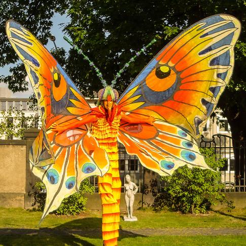 Schmetterlinge-1.jpg