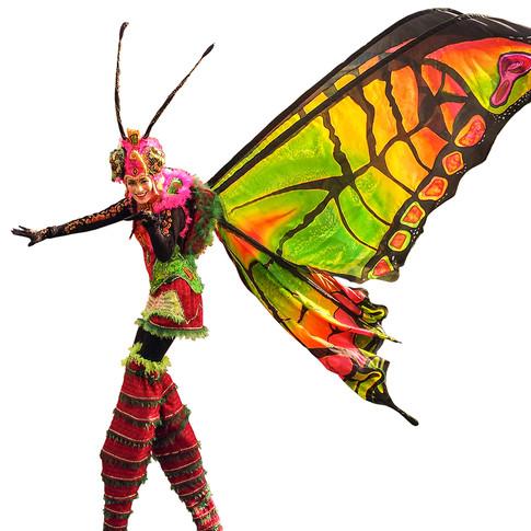 Schmetterlinge-4.jpg