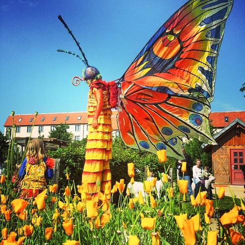 Schmetterlinge-13.jpg