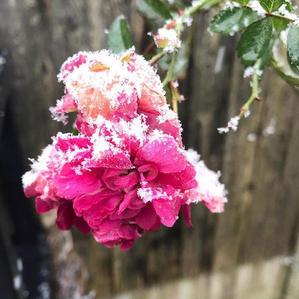 Daisy Brierley when summer meets winter.