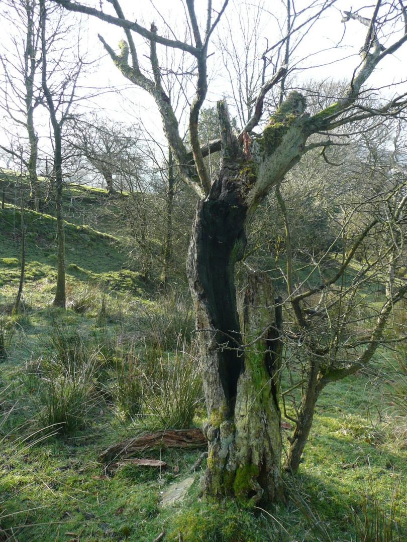 _Burnt tree.jpg