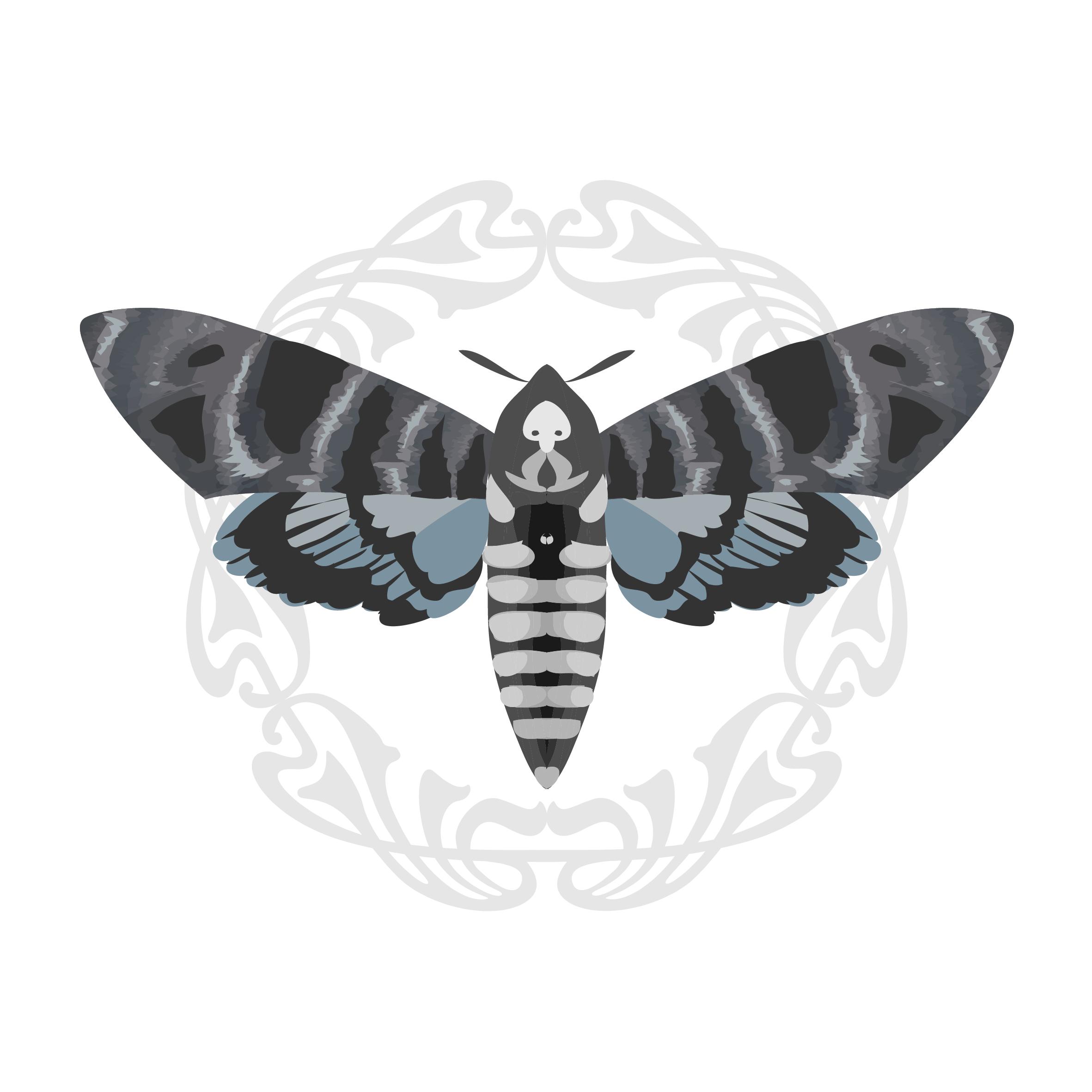 19. Moth