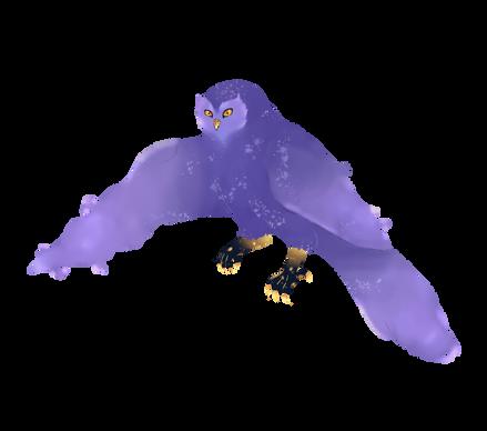 Aura Owl