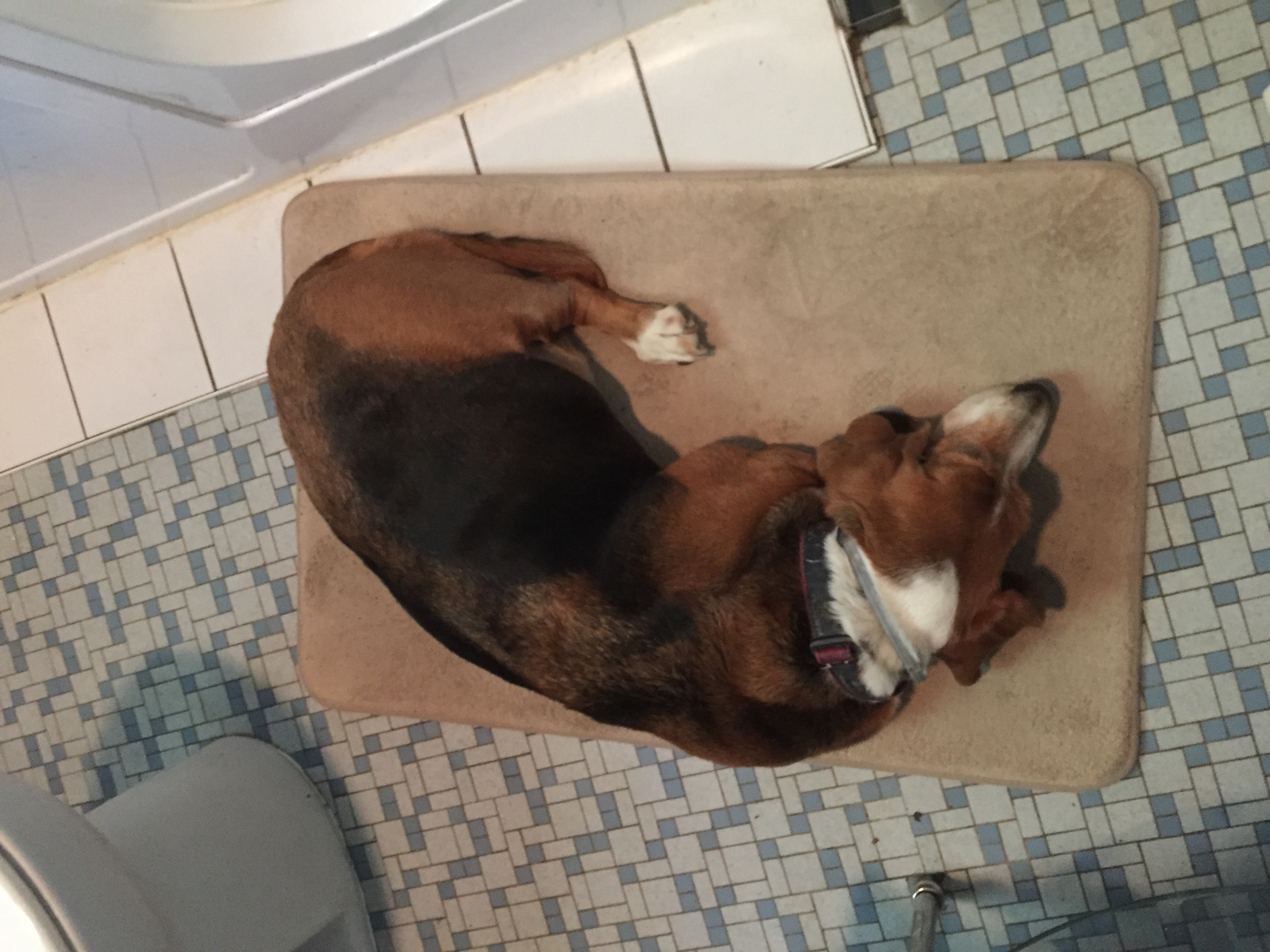 Cletus occupying the bathmat