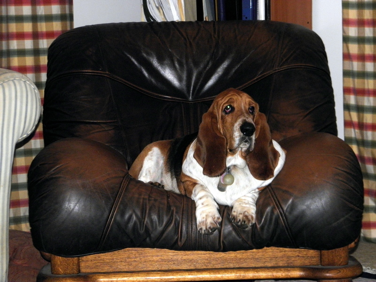Homer in MY chair watching TV