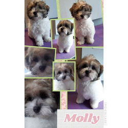 1st puppy groom. Molly. How cute is she.