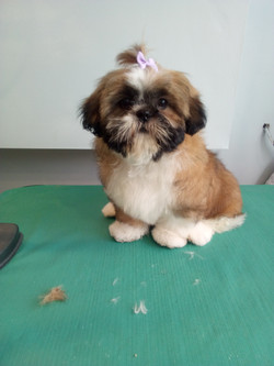 chu's first groom