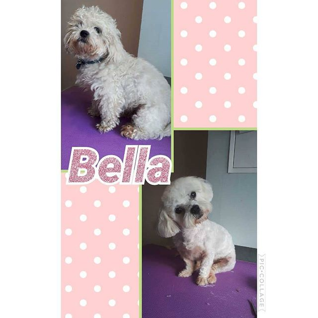 Little rescue dig bella