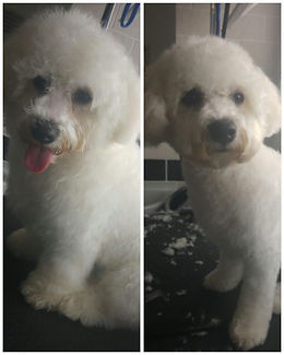 gorgeous lottie before and after