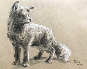 Fox on tonepaper