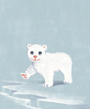 Little ice bear