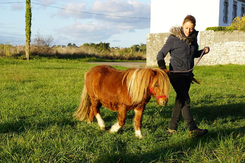 Nous avons accueilli la semaine dernière notre petit poney Shetland, nommé Tonnerre, pour le plaisir de tous les occupants de la ferme!!