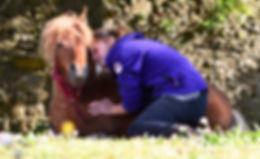 thérapie avec le cheval, équithérapie, médiation animale