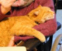 chat en médiation animale et zoothérapie