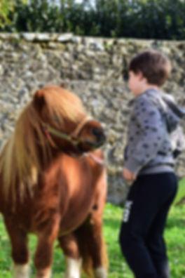 formation thérapie avec le cheval