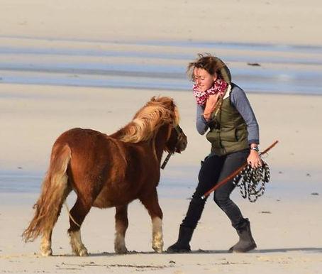 travail avec le cheval en liberté