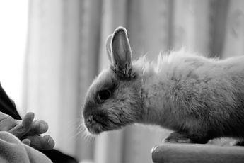 lapin en médiation animale, zoothérapie