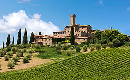 italian vineyard.jpg