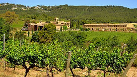 Spanish vineyard.jpg