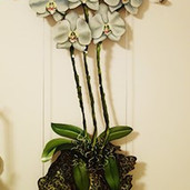 White Orchids on cable system