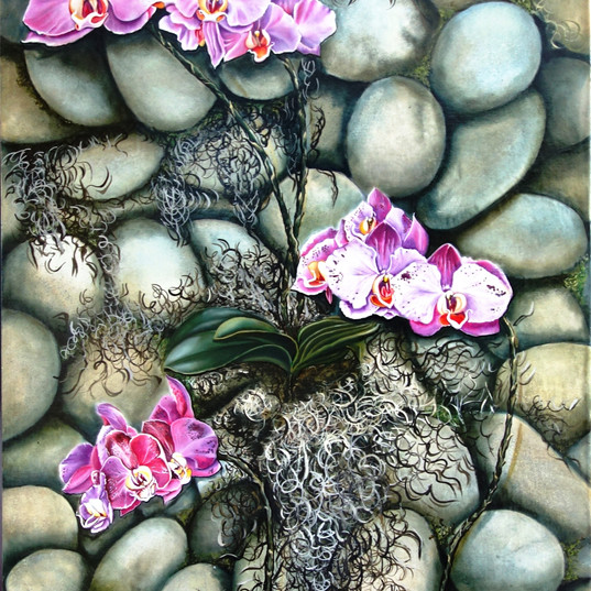 Orchids on stones