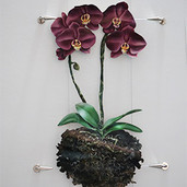 Orchids on cable system 31x20 inches
