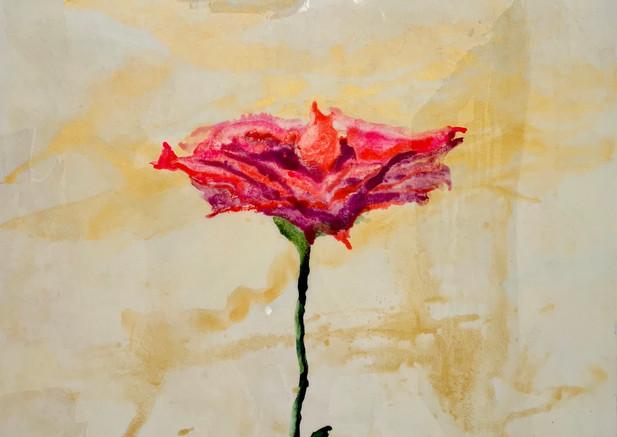 Graciela Montich Marble roses 100x100 mi